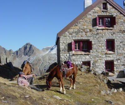 Pferdepension