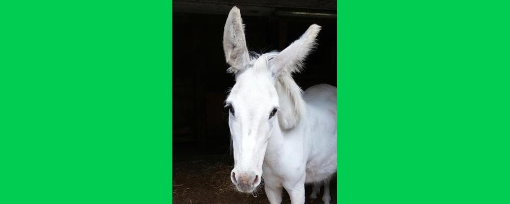Nino sucht ein Esel Gspändli!