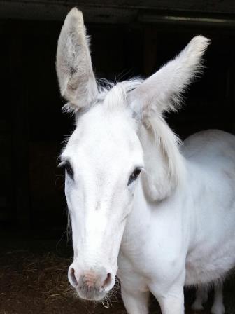 """Nino """"Er sucht noch ein tolles Esel Gspändli"""""""